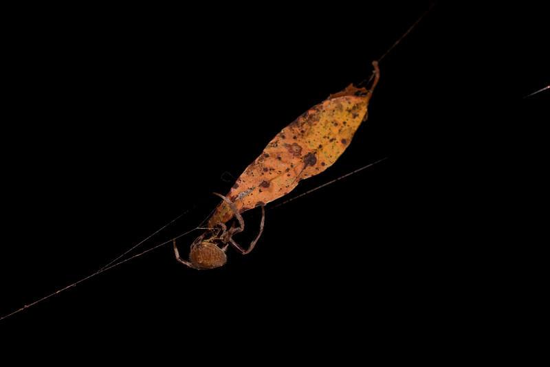 Huntsman and Leaf
