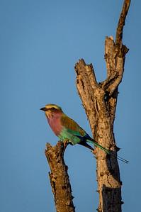 Kruger National Park 2018