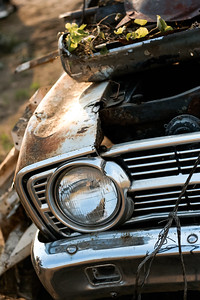 Abandoned Old Car with Plants Growing on It