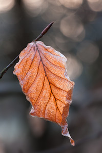 Autumn leaf and bokeh
