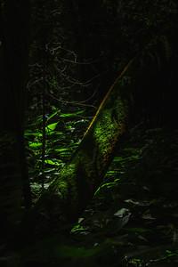 Mossy Log in a Dark Forest