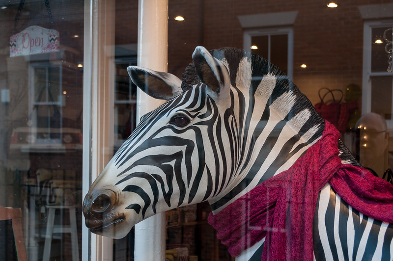 Zebra in scarf