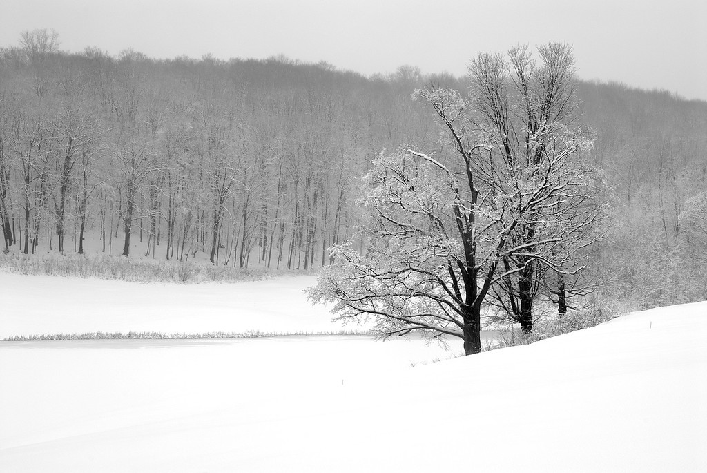 snow-covered trees and pond during spring snowstorm