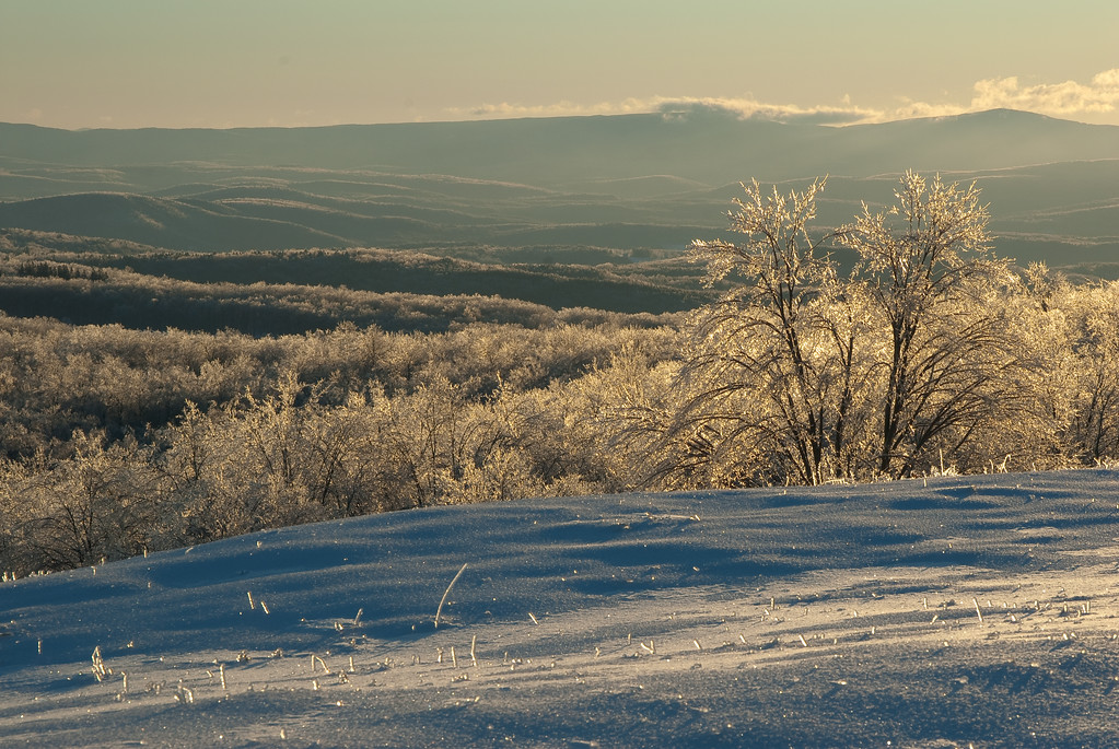 winter scenes with sunrise and ice-covered vegetation