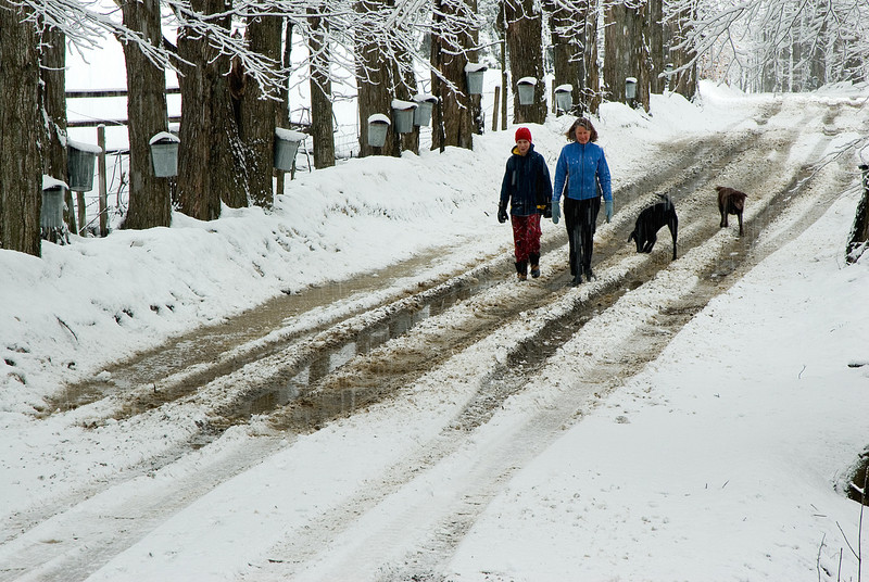 fresh wet spring snow on trees on country road with people and dogs walking