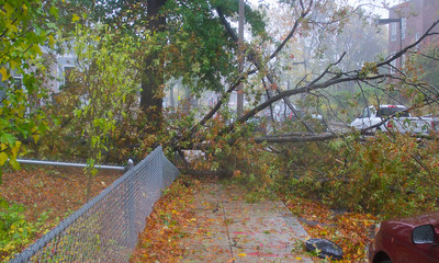 102912, Boston, MA - A tree blocking Crawford Street that was brought down by Hurricane Sandy's winds. Photo by Ryan Hutton