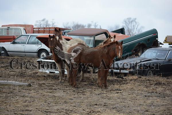 02-02 Horses