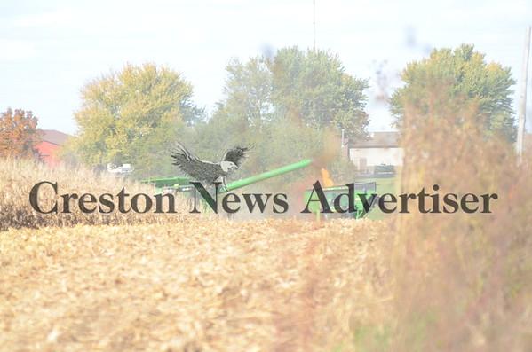 10-20 Dunphy harvest
