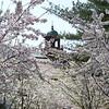 2012; campus; spring