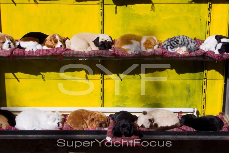 Stuffed cats & dogs