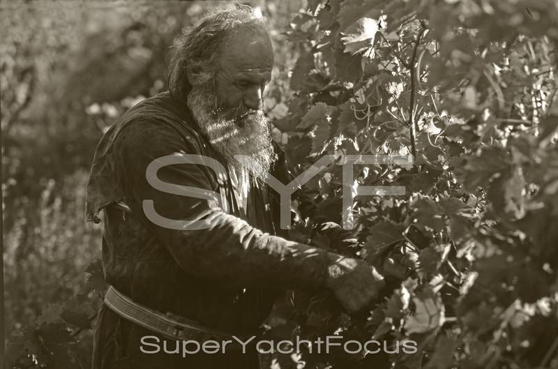 Father Simeone in the vineyard
