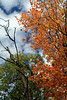 Autumn in Our Park 16