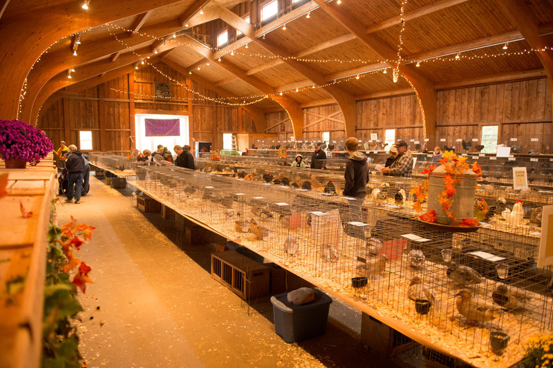 Poultry at Ag Fair