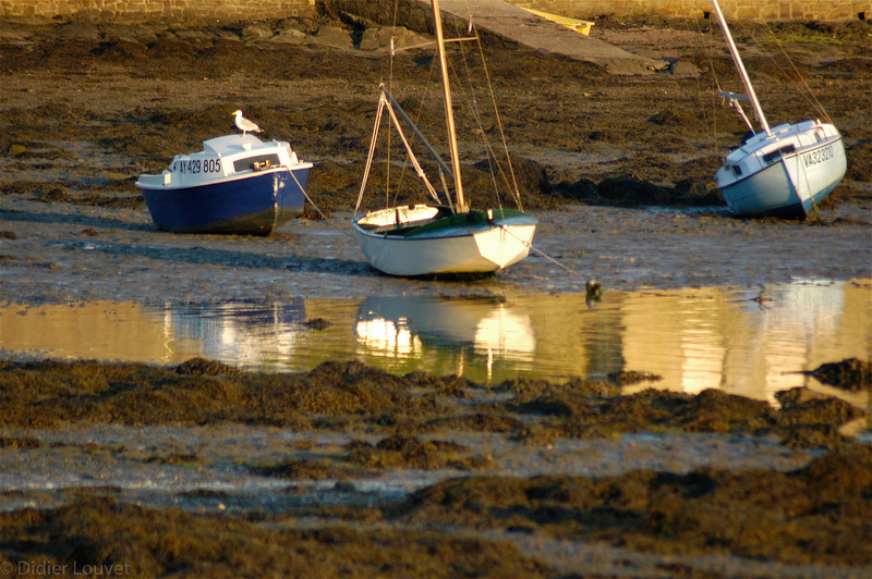 Lumiere doree sur le port de Larmor Baden, Morbihan