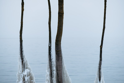 Frozen trees around lake Geneva