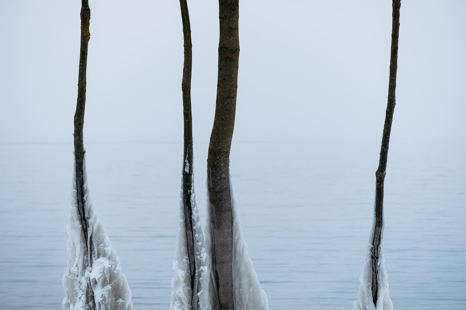 Frozen trees around lake Geneva