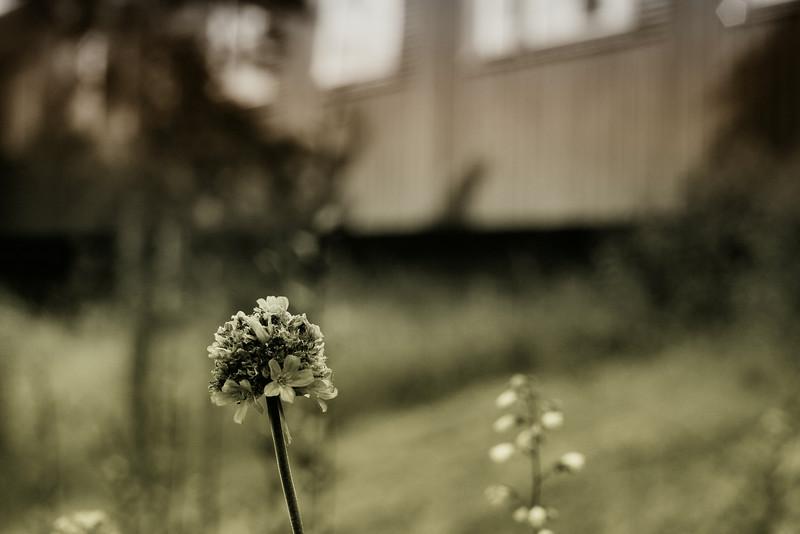 Flower, Yasuragi