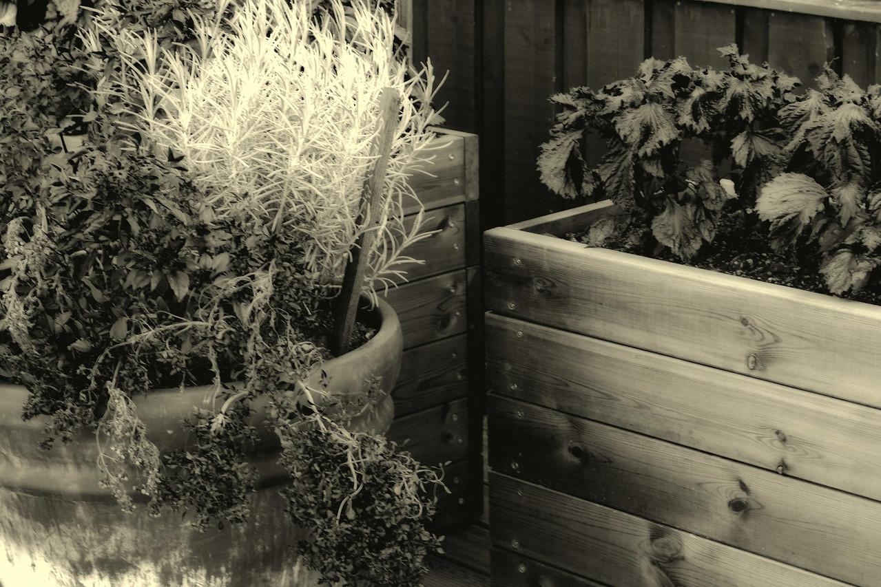 Herb garden, Yasuragi