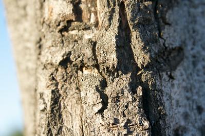 Macro tree
