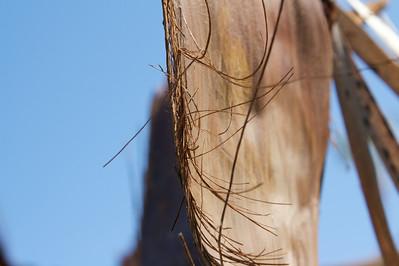 Macro palm leaf