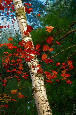 Ricker Pond State Park, Vermont