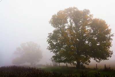 Foggy field, Lancaster PA