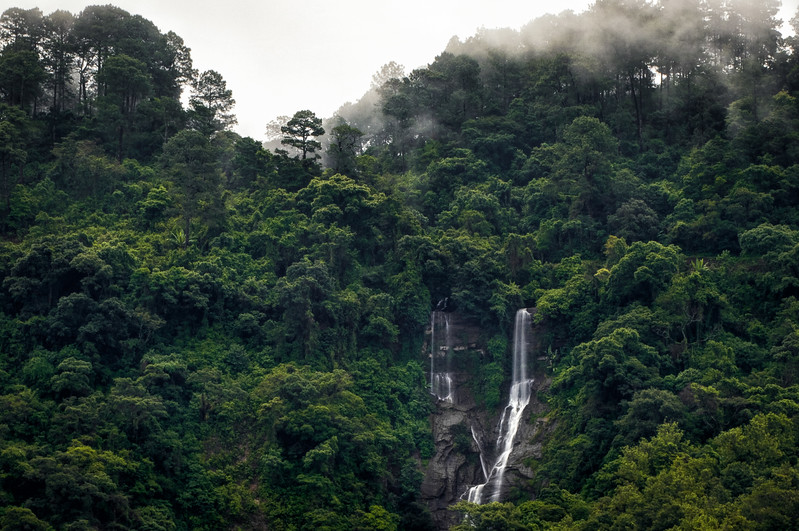 Cloud Forest Waterfalls