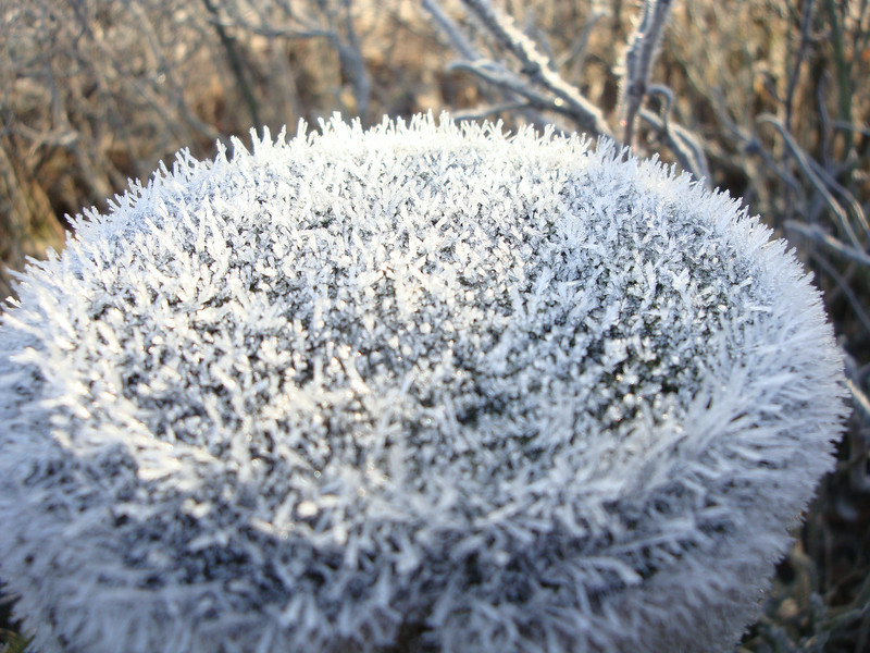 Frost on a pole