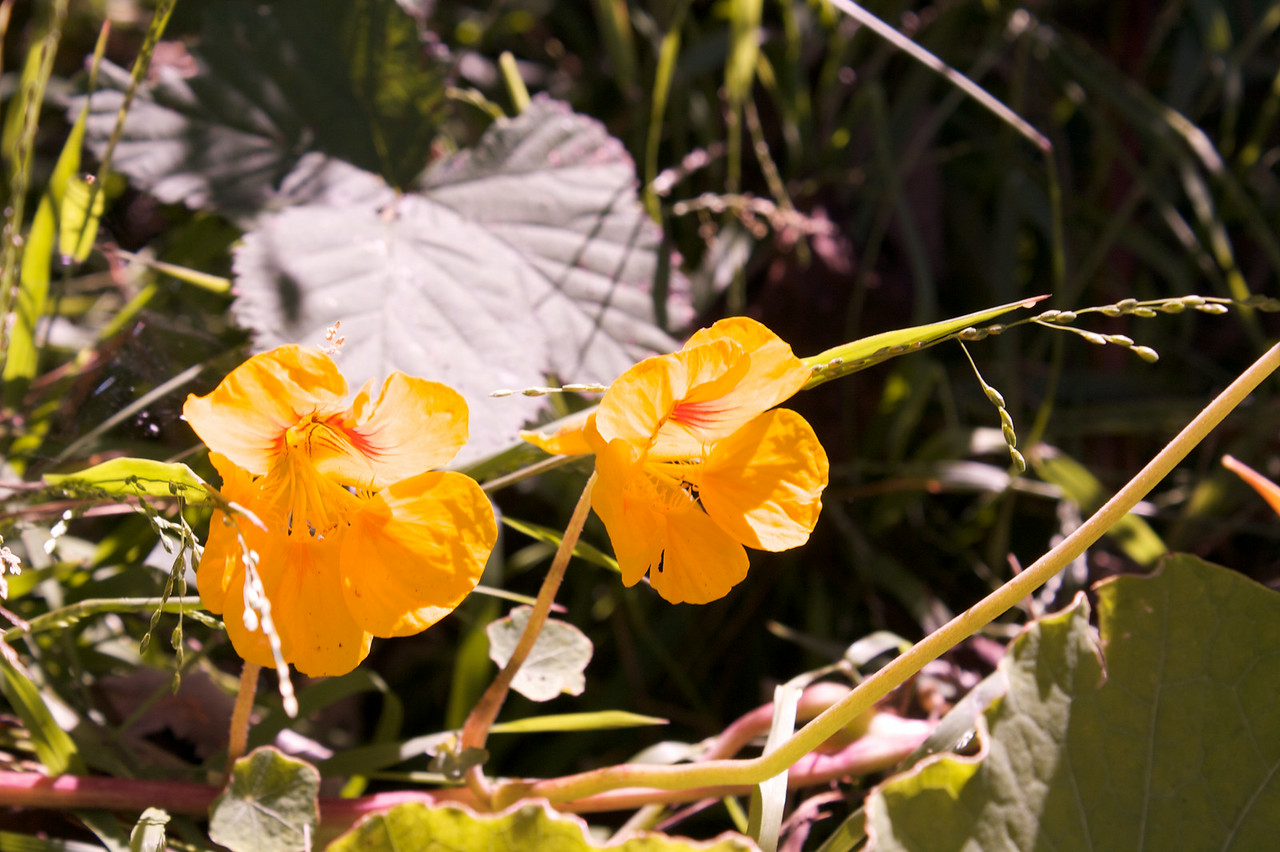Golden Gate Park flowers