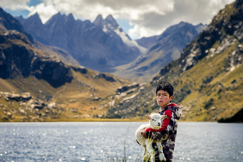 Mountains, Lake, Sheep, Boy