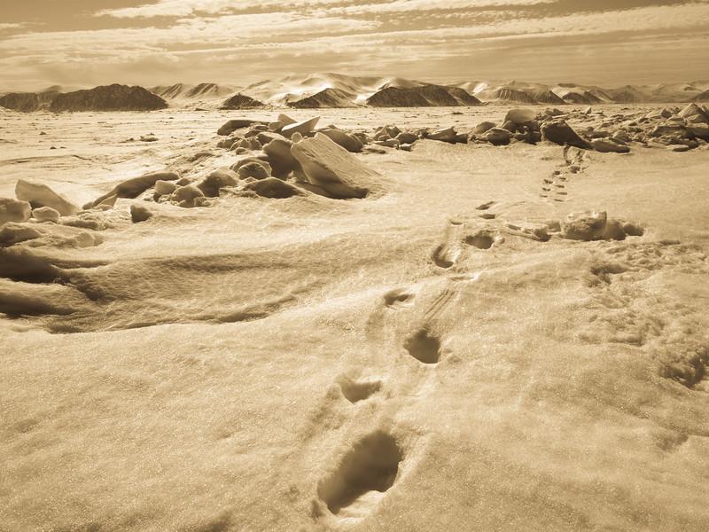 Bylot Island-1030364.jpg