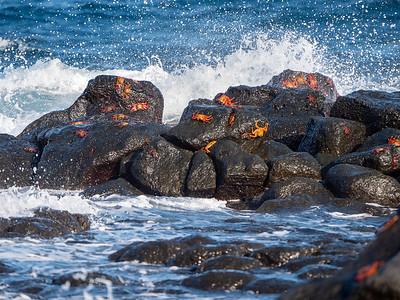 Sally Lightfoot Crabs on the edge