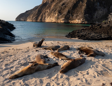 Sea Lion Beach Party