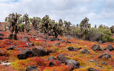 Volcanic Soils still produce a richenss of organic life
