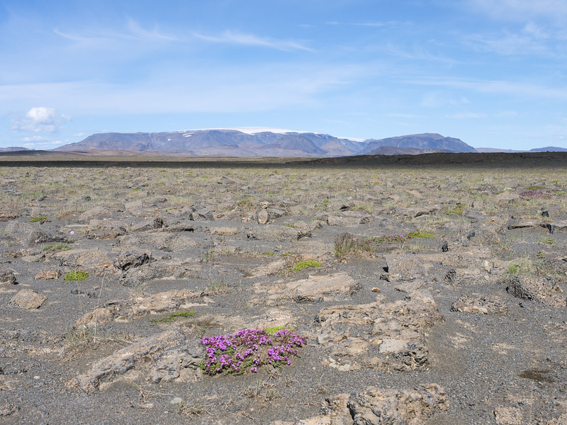 The semiarid high plains of Iceland