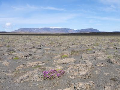 The semiarid high plains of Iceland