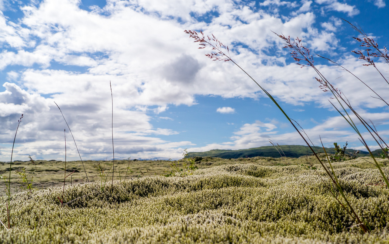 Basaltic  Moss