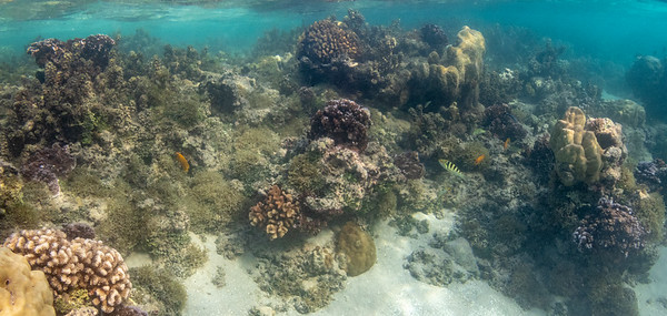 Raiatea Reef