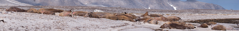 Layed Out - All walrus no carpenter