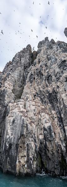 The cliffs of Brunnich Guilemont