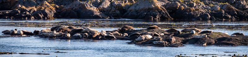 Shark Reef Seal Sanctuary