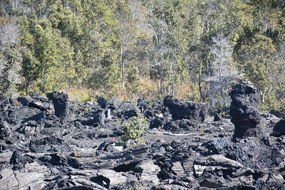 Rafted Pahoehoe and Lava Trees