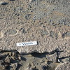 Human Footprints in Ashy Mud