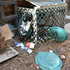 Bear attacks the garbage during the night at the CU MRS lodge. June 19, 2016. (Photo/Aisha Morris, UNAVCO)
