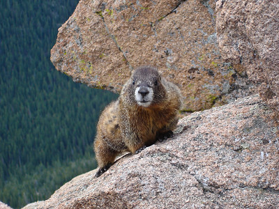 Don't Call Me Phil... taken in Rocky Mt. National Park