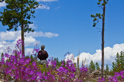 Cloud Surfing Among the Fireweed