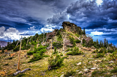 Tree line area in Rocky Mt. National Park displaying an area of Krummholz, series- 3 of 3, with a bit of HDR fantasy and weather enhanced.
