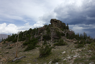 Tree line area in Rocky Mt. National Park displaing an area of Krummholz, series- 1 of 3.