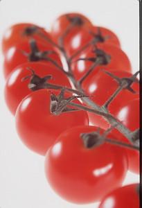 Vine tomatoes. Pic-Geoff Ward.
