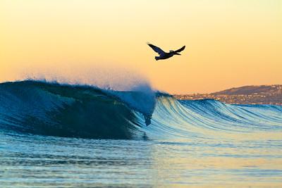 San Clemente Beach Pelican